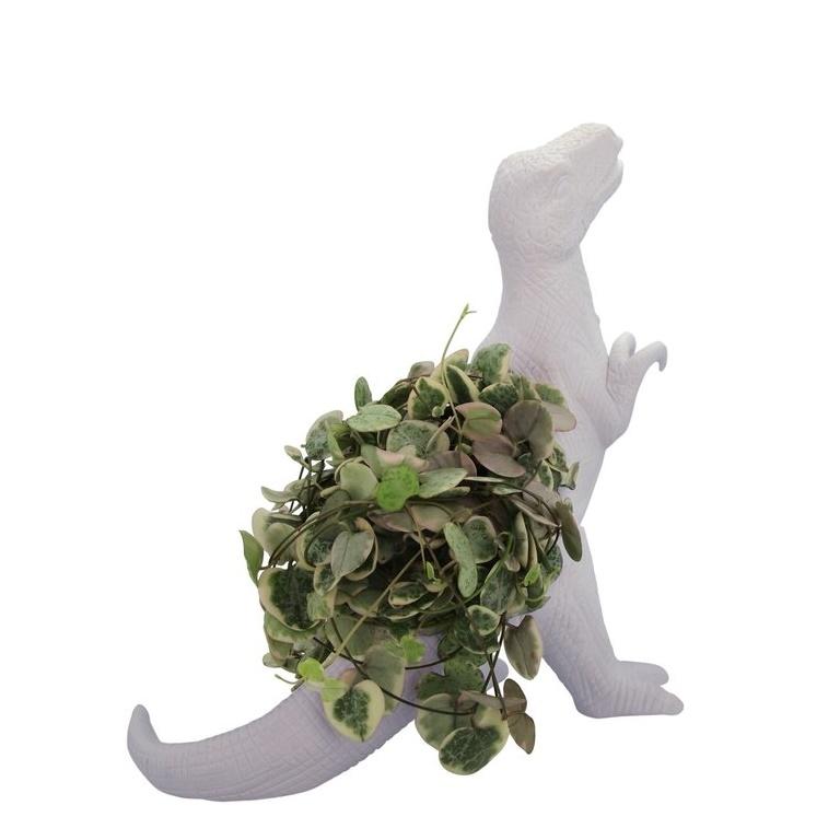 Tyrannosaurus rex plantosaurus