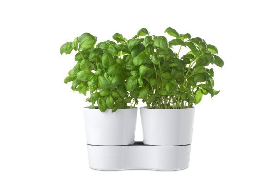 Hydro herbs twin nordic green
